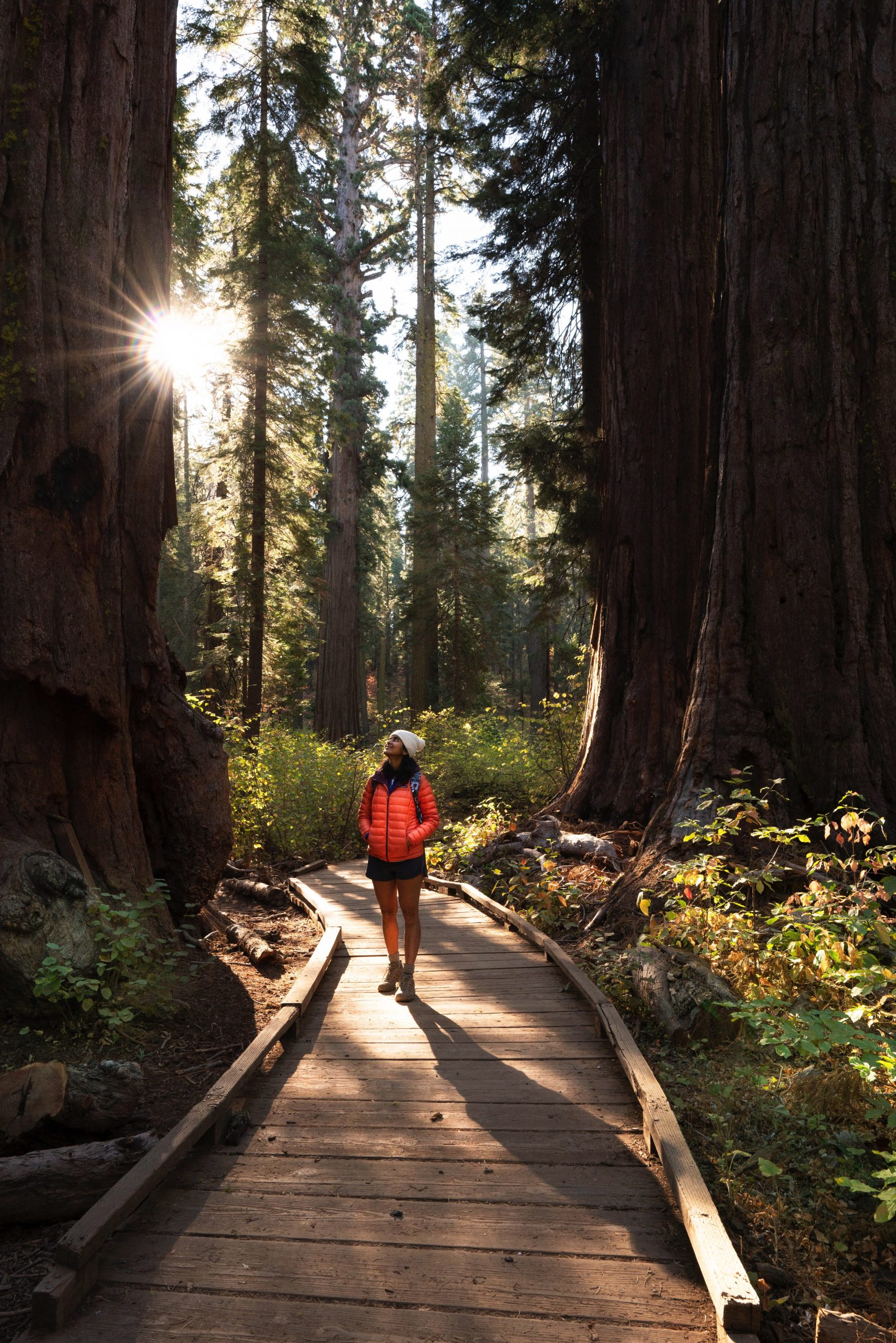 person walking in big trees