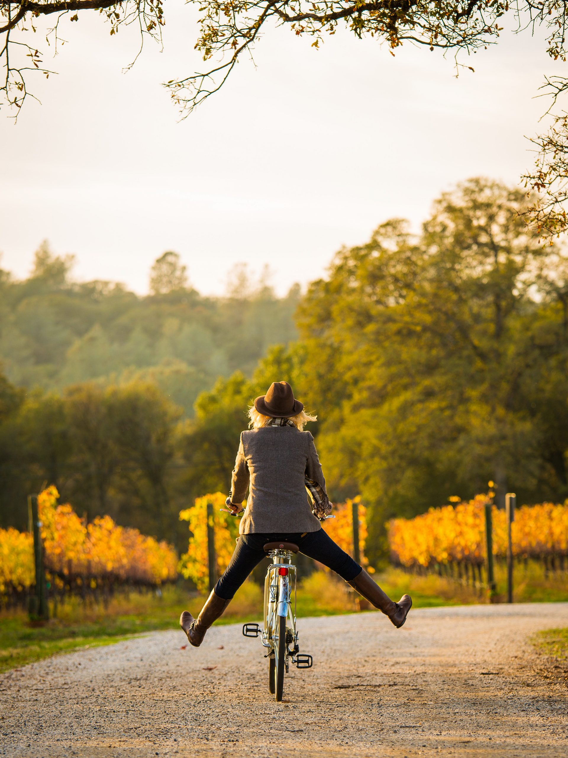 Person on a bike in a vineyard